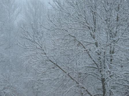 Snowladen trees